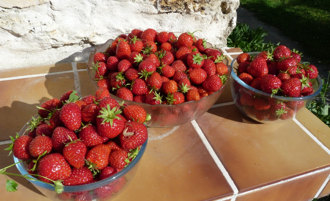 Pour les fraises bio maison... venez en été !